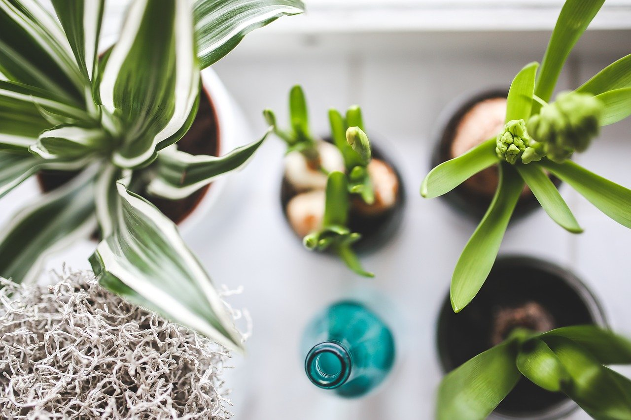 image - 5 Low Sunlight Indoor Plants to Add to Your Home