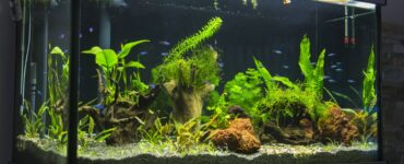 featured image - How to Build Your Own Aquarium