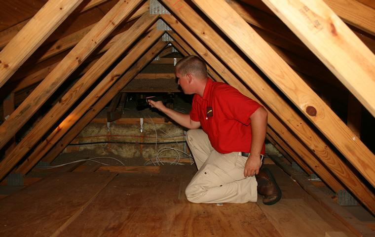 How To Choose An Attic Cleaning Service For New Homeowners