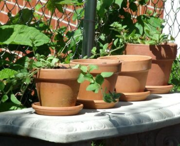 featured image - How to Get Free Pots for Plants 4 Ingenious Techniques
