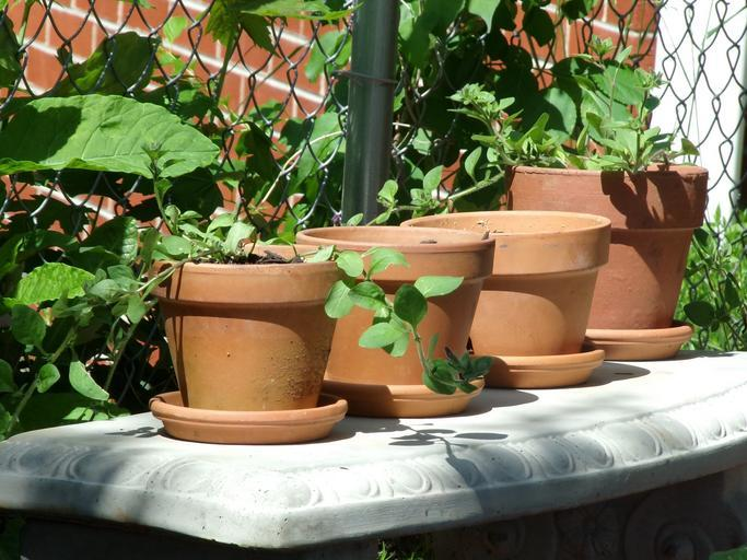 image - How to Get Free Pots for Plants 4 Ingenious Techniques