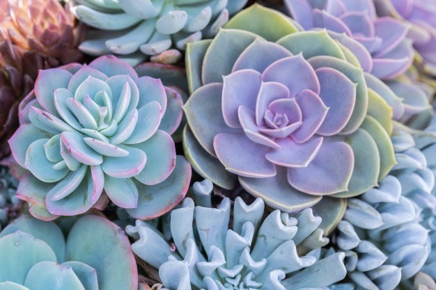 image - Succulent Care: An Annual Overview