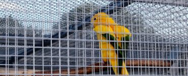 featured image - Why do you need a bird aviary in your backyard