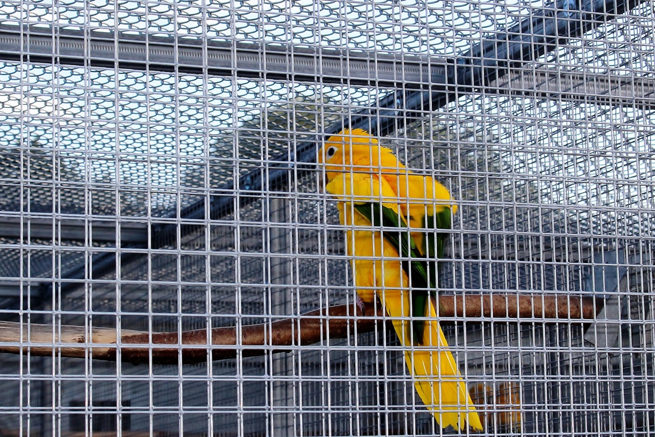 image - Why do you need a bird aviary in your backyard