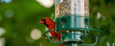Featured image - 10 Tips to Attract Wildlife to Your Garden
