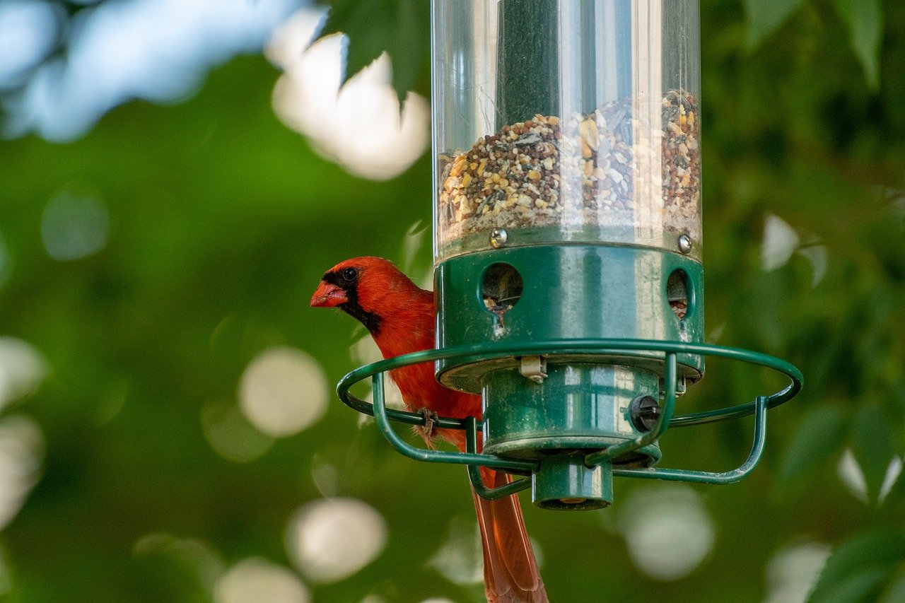 image - 10 Tips to Attract Wildlife to Your Garden