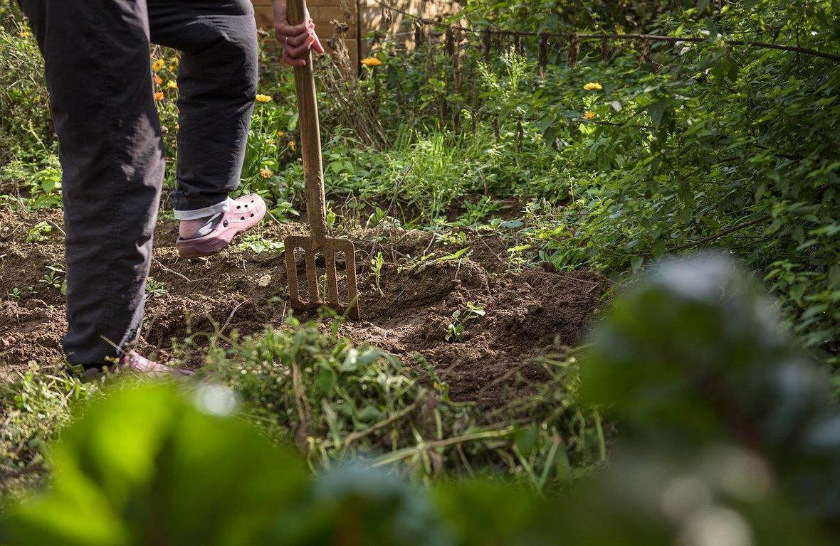 image - 7 Common Mistakes Most of the Gardeners Make