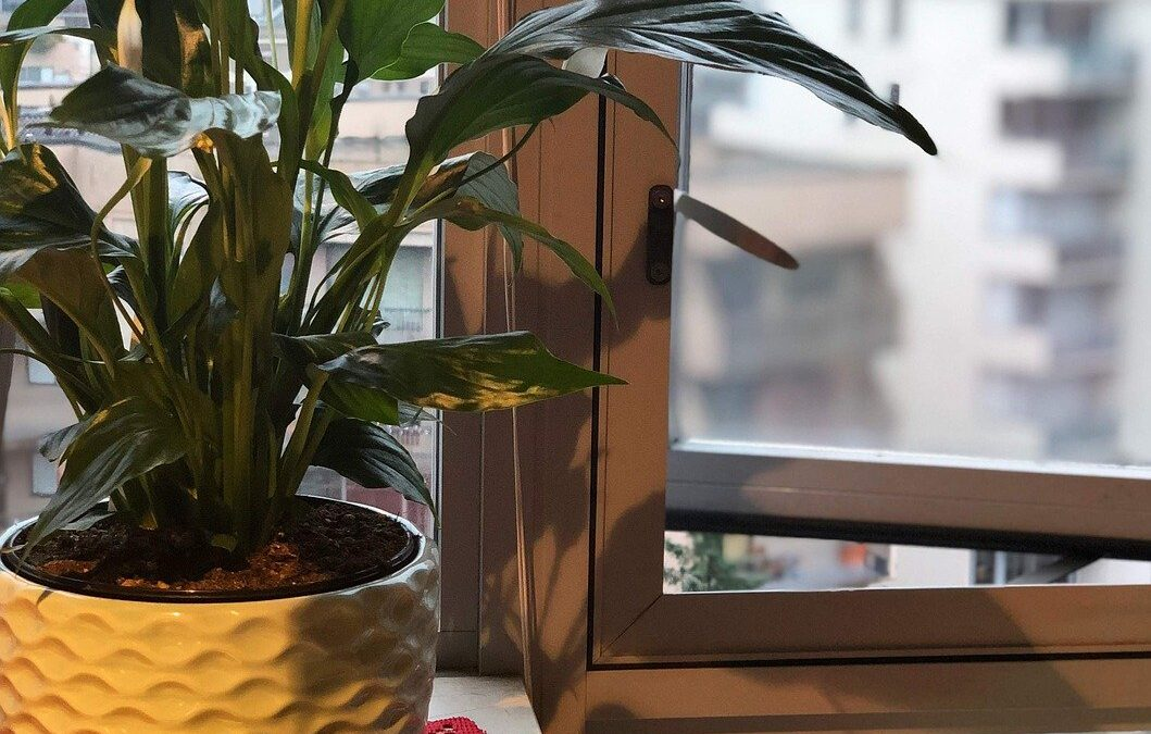 Indoor Plants to Improve Air Quality at Home