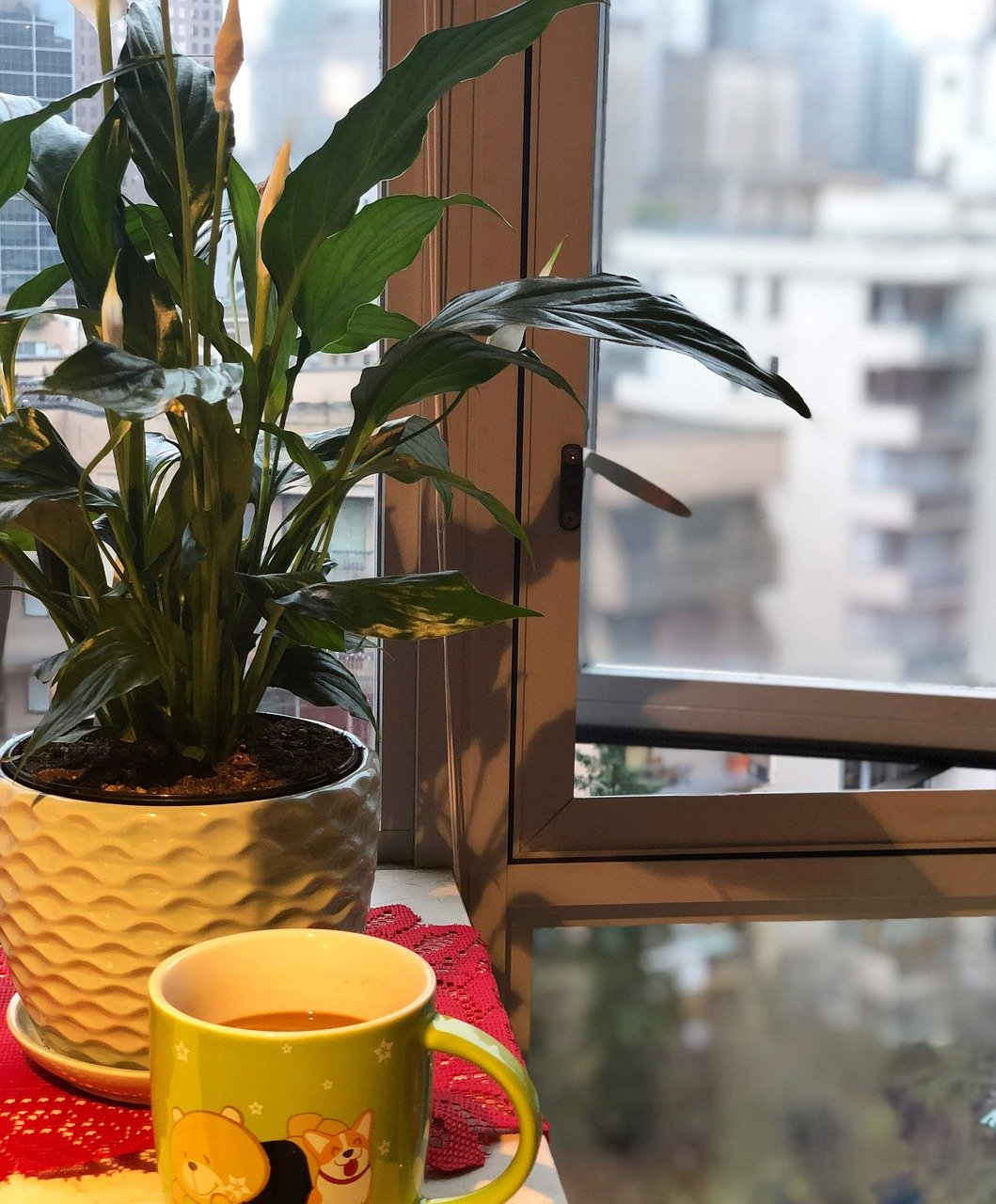 image - Indoor Plants to Improve Air Quality at Home