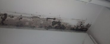 featured image - 5 Steps to Get Rid of Mold from Your Home