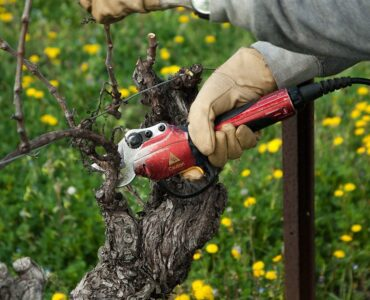 Featured image - Benefits of Doing Gardening with Power Tools
