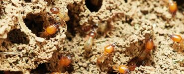Featured image - 4 Signs Your Home Is Crawling With Termites