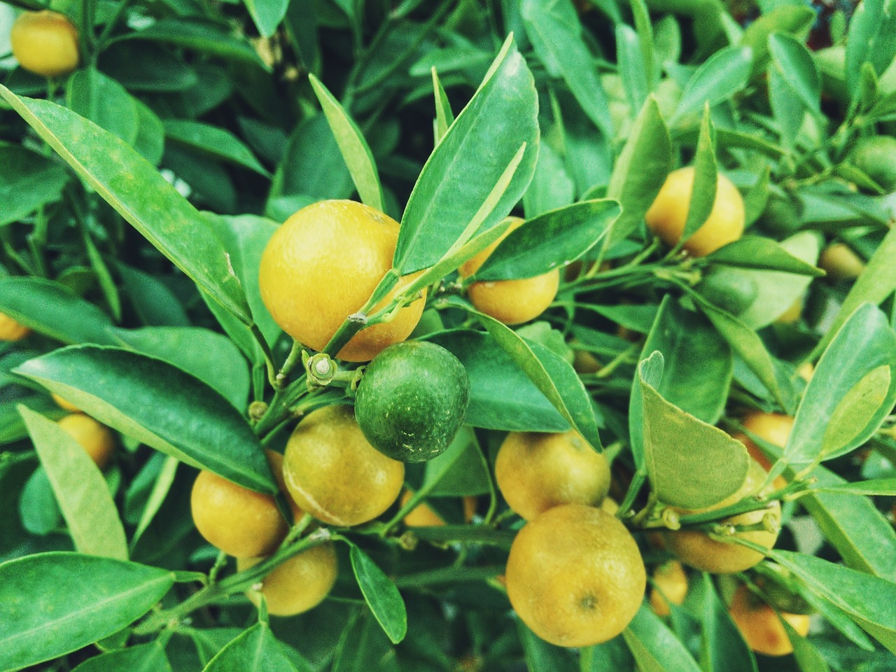 image - 3 Fruit Trees That Can Bloom in Your Garden