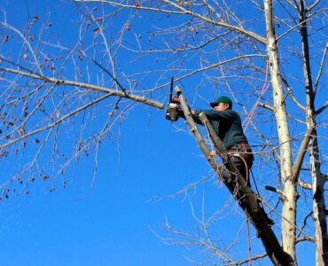Featured image - 5 Reasons to Hire a Tree Service Company for Backyard