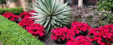 Featured image - Design Your Garden with These Landscaping Plants