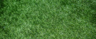 featured image - How Efficient and Beneficial to Install Artificial Grass