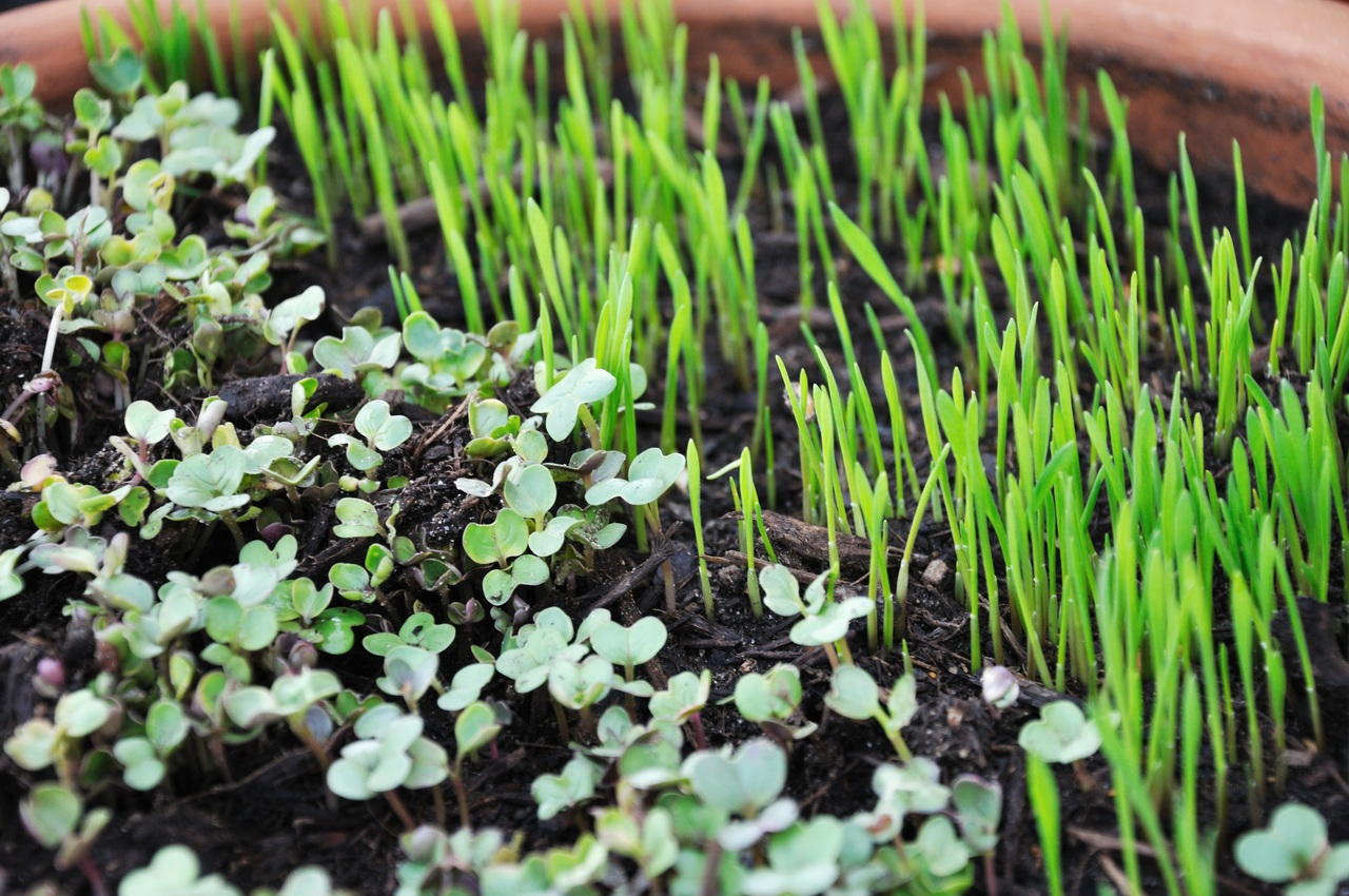 image - How to Make the Best Home Gardening Designs Easy Hacks
