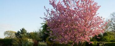 featured image - Some Simple Ways to Care for Your Trees