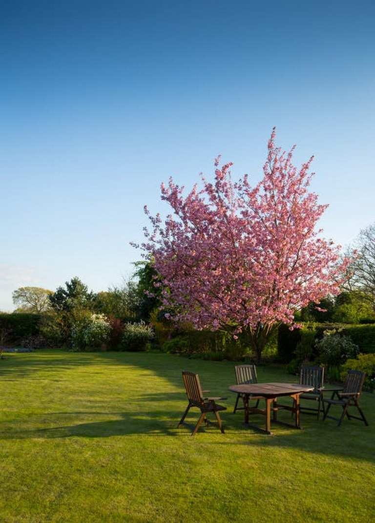 image - Some Simple Ways to Care for Your Trees