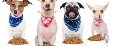Featured image - What Is Your Dog Feeding Schedule Be Like
