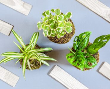 Featured image - Best Low-Maintenance Houseplants for Newbies