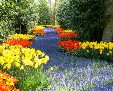 featured image - 4 Ways to Prepare Your Garden for Spring
