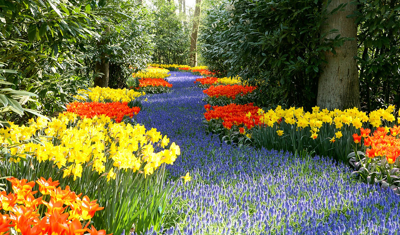 image - 4 Ways to Prepare Your Garden for Spring