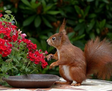 featured image - 5 Tips to Keep Your Backyard Squirrel-Free This Spring