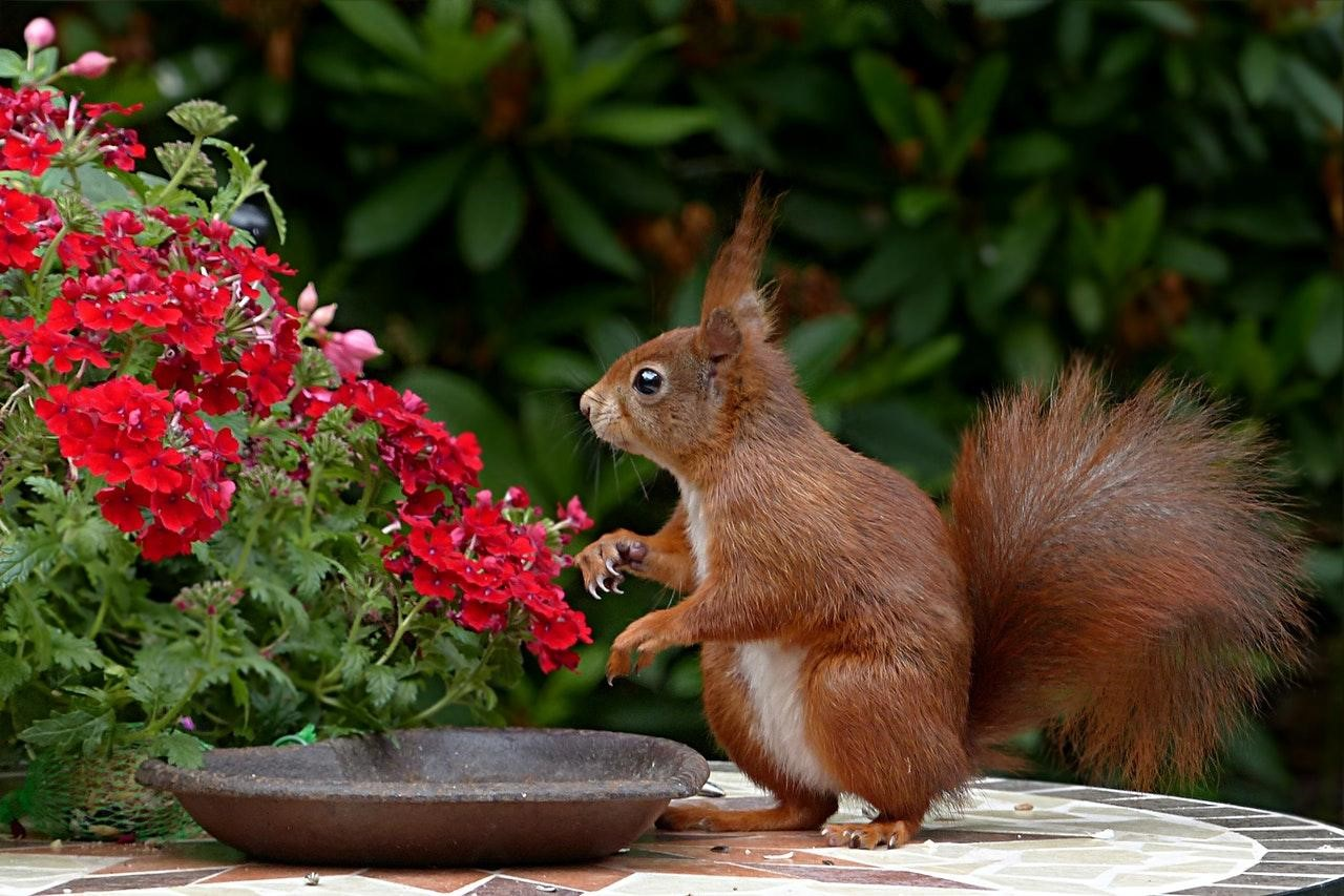 image - 5 Tips to Keep Your Backyard Squirrel-Free This Spring