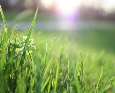 featured image - 5 Ways to Get Your Lawn Ready for Spring