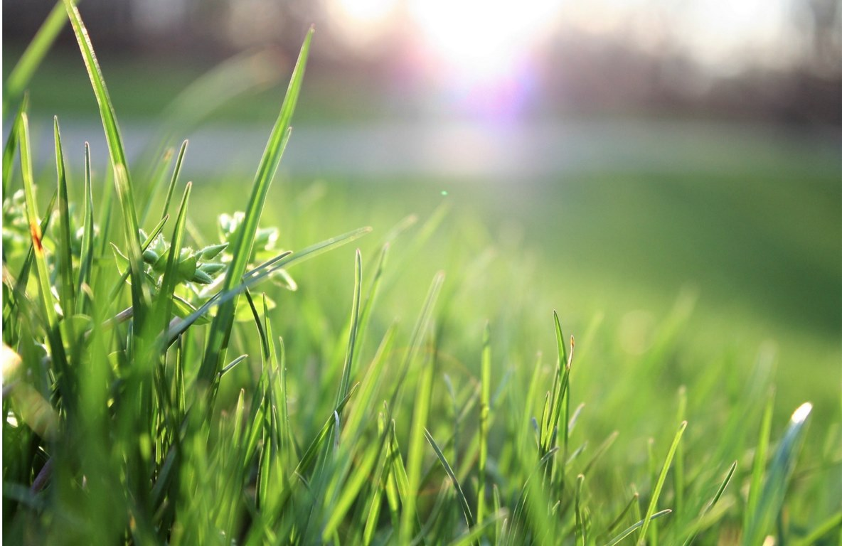 image - 5 Ways to Get Your Lawn Ready for Spring