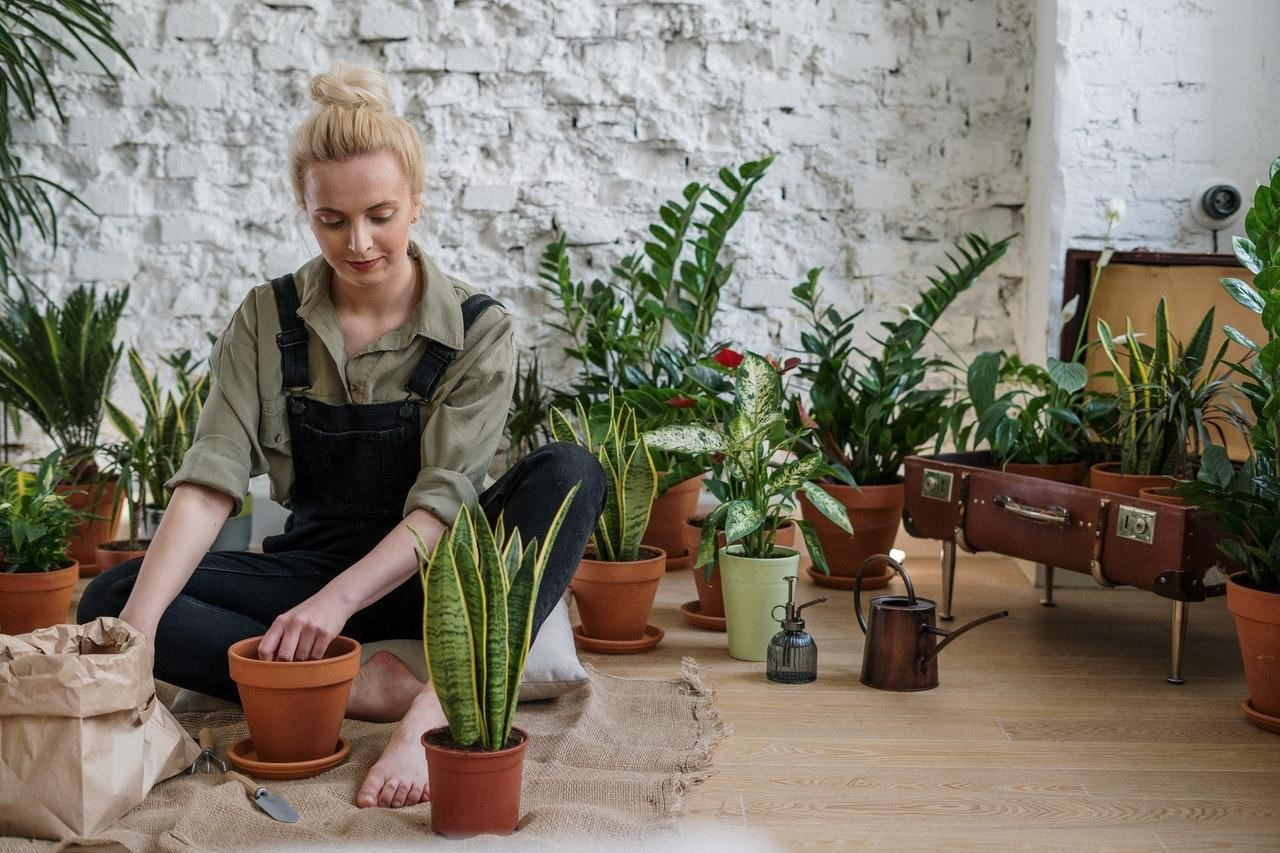 image - 7 Tips for Taking Your Gardening Indoors