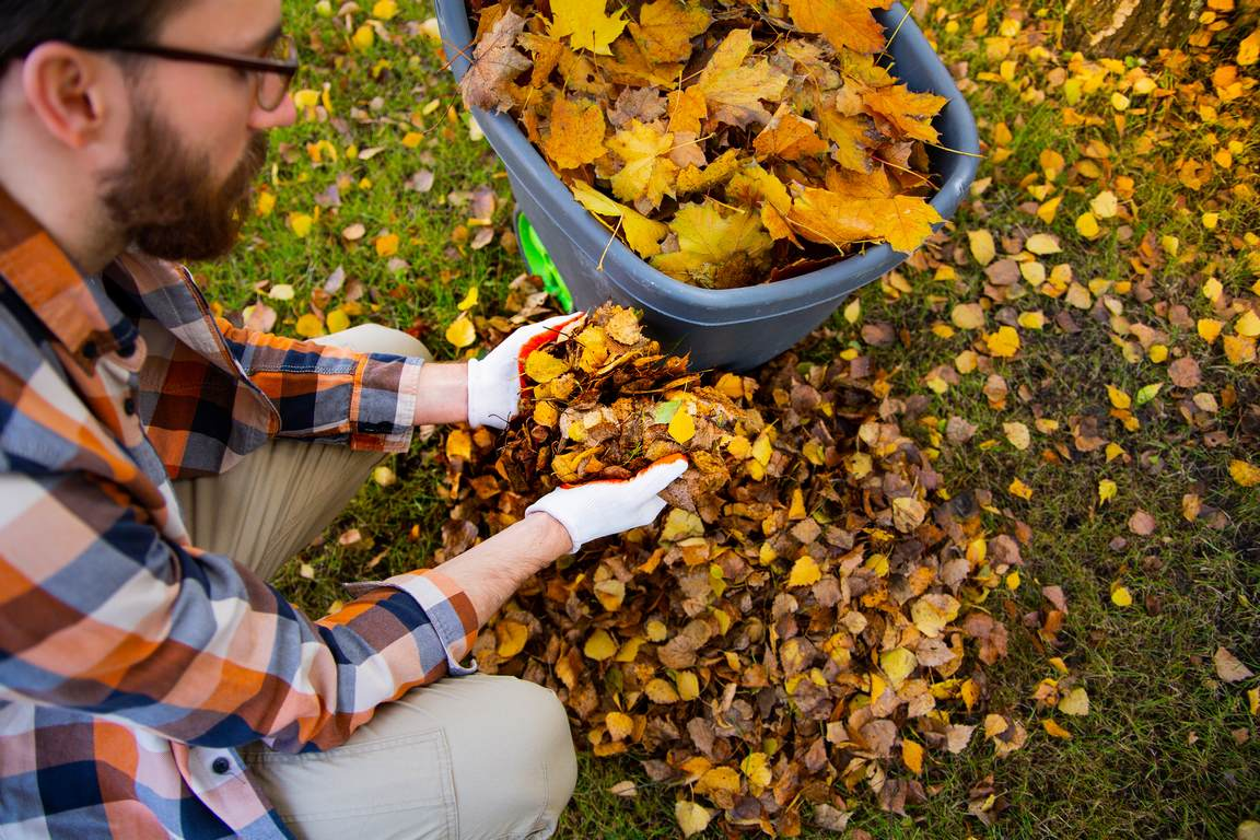 image - 9 Recommended Garden Waste Removal Ideas