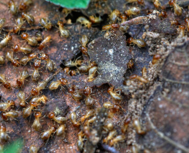 featured image - Debunked 6 Popular Myths About Termites You Need to Know