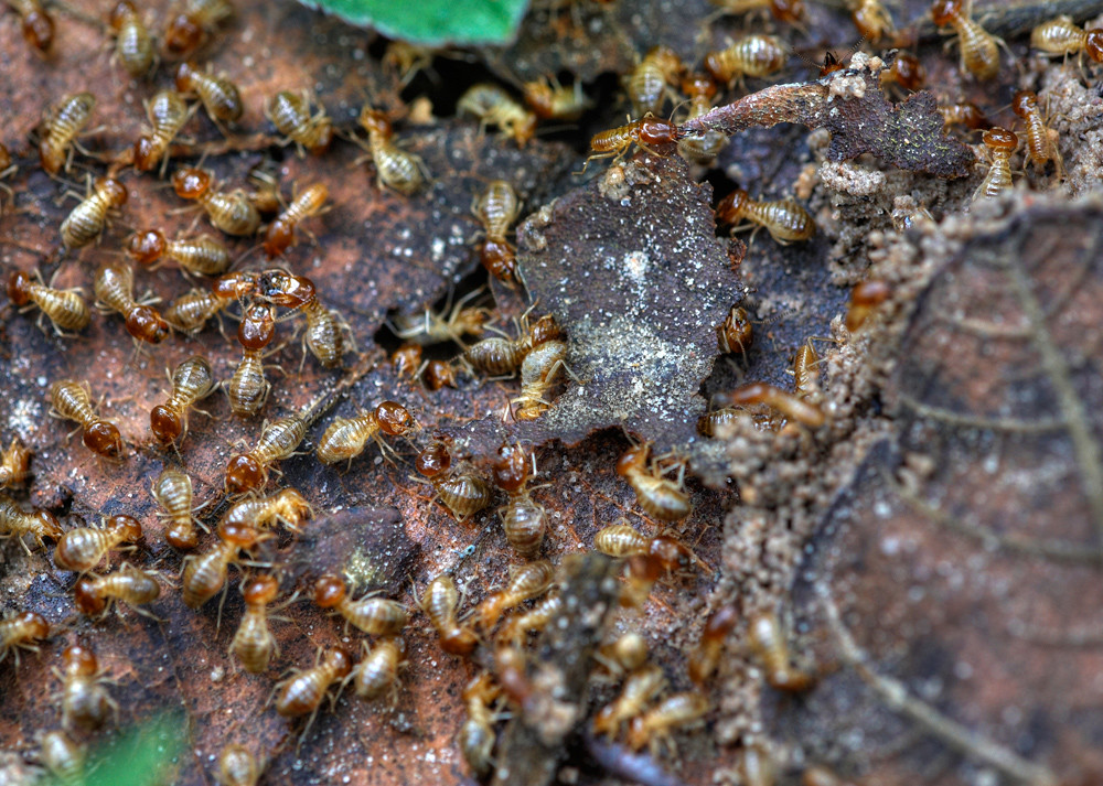 image - Debunked 6 Popular Myths About Termites You Need to Know