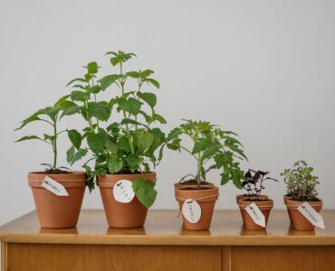Featured image - Grow Your Food: 5 Easy-To-Grow Edible Plants to Cultivate at Home