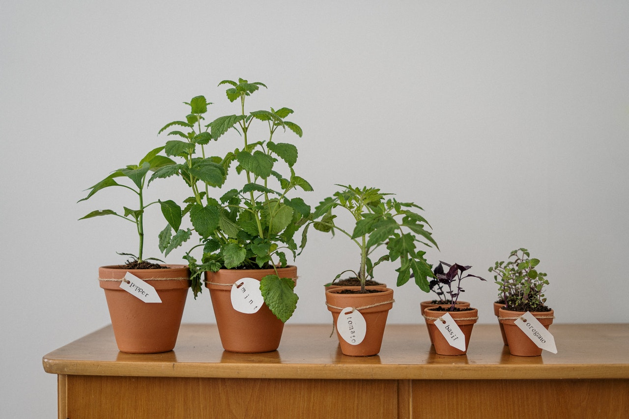 image - Grow Your Food: 5 Easy-To-Grow Edible Plants to Cultivate at Home
