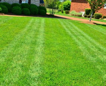 featured image - How Can I Make My Lawn Look Good Without Grass