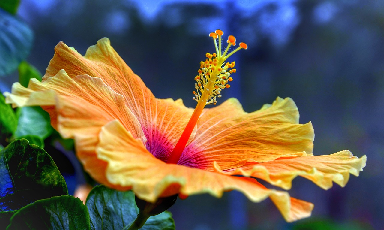 image - How to Care for Your Hibiscus Tree