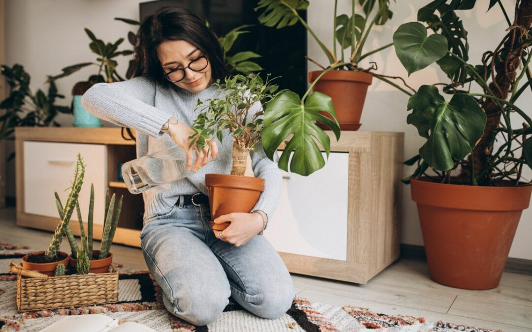 Selecting the Right Houseplants