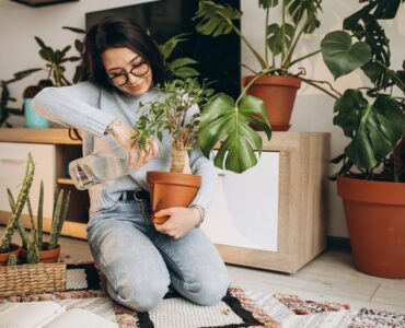 Featured image - Selecting the Right Houseplants