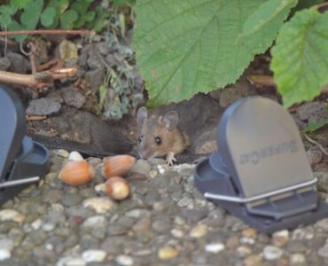 featured image - Squeaks in the Night 5 Signs that You Need Pest and Rodent Control