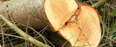 featured image - Tricky Green Ethics When to Cut Down a Tree