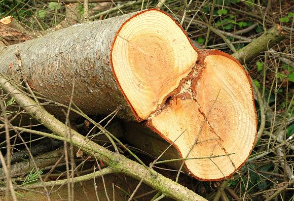image - Tricky Green Ethics When to Cut Down a Tree