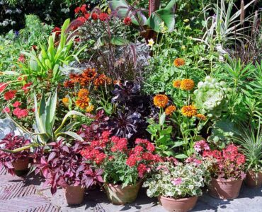 Featured image - 15 Container Plants for Shade Porch That You Don't Know