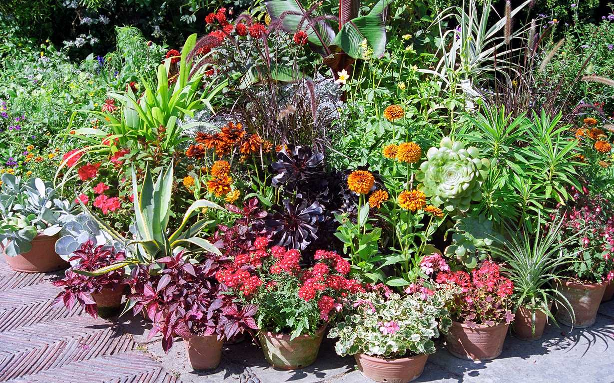 image - 15 Container Plants for Shade Porch That You Don't Know