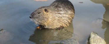 Featured image - How to Control Critters in Your Pond
