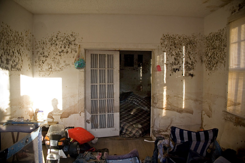 image - Must-Know Signs of Black Mold