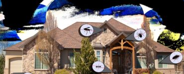 featured image - Pest Control for Your Home – What You Need to Know