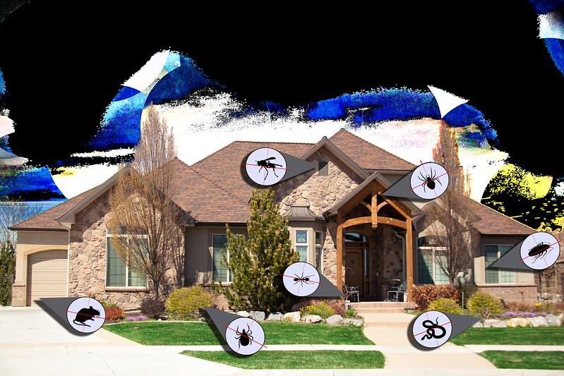 Pest Control for Your Home – What You Need to Know?